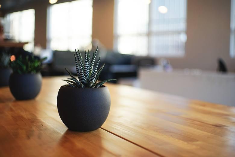 W galerii znajdziecie rośliny, które mogą przyciągać do nas szczęście. Zobaczcie, które rośliny warto trzymać w naszych domach.Zobaczcie szczegóły na