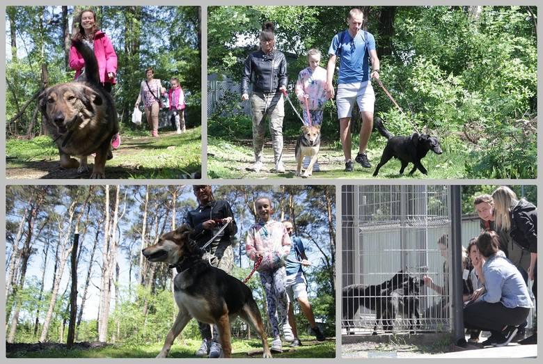 Już po raz dziewiąty w schronisku dla zwierząt we Włocławku zorganizowano Bieg na 6 łap. - Mamy stałych bywalców tej imprezy, ale przychodzą kolejni