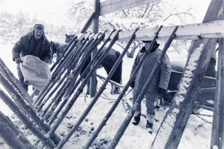 Dokarmianie leśnej zwierzyny zimą stulecia w paśniku koło Słupska.