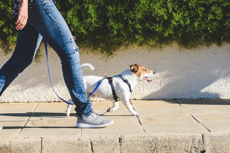 Mandat za spacer z psem mogą dostać opiekunowie, którzy zlekceważą zachowanie środków bezpieczeństwa. Od 10 kwietnia wysokość grzywny wzrośnie.