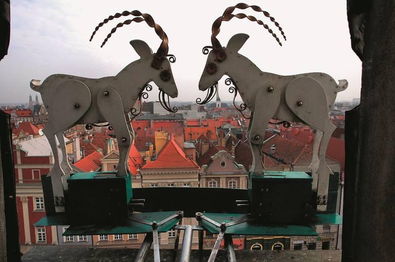 Koziołki, a może Stary Browar - co dziś jest symbolem Poznania?