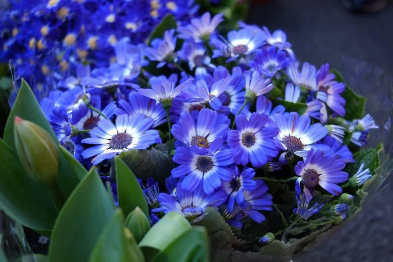 Bywa, że kupujemy pięknie kwitnącą roślinę doniczkową, która po przekwitnięciu zamiera. Nie zawsze musi to wynikać z naszych błędów lub zaniedbań. Po