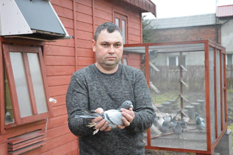 Mistrz Polski oraz jego gołębie
