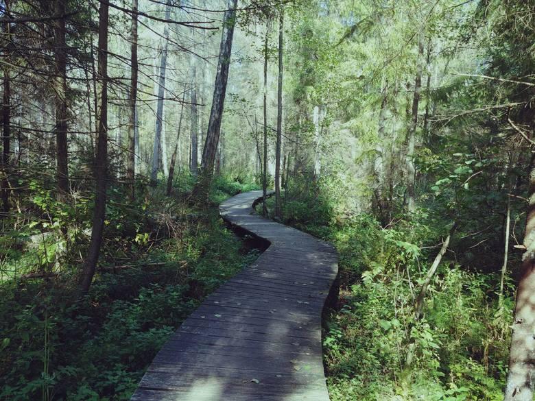 Rezerwat tworzy rozległa zabagniona dolina z licznymi źródliskami otwartymi, mulistymi i torfowiskowymi. Trasę przez las przemierzymy malowniczymi kładkami,