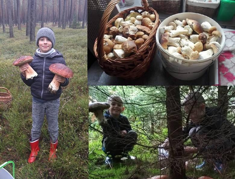 Sezon grzybowy już się rozpoczął, o czym świadczą zdjęcia, które nasi Internauci przesłali nam na adres alarm@gk24.pl, bądź też wkleili na naszym profilu