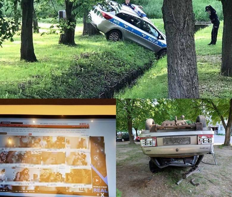 Przestępcy, którzy wpadali przez głupotę, spalony wrak samochodu, którego nie można usunąć, przepowiadający pogodę łabędź, czy kierowca tira, który w