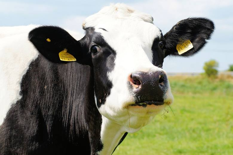 Ceny skupu mleka. Podajemy stawki przed Wielkanocą 2019