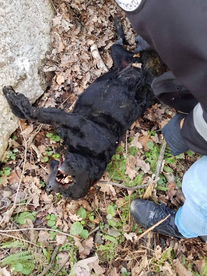 Zabił z premedytacją. Przejechał psa kilka razy samochodem