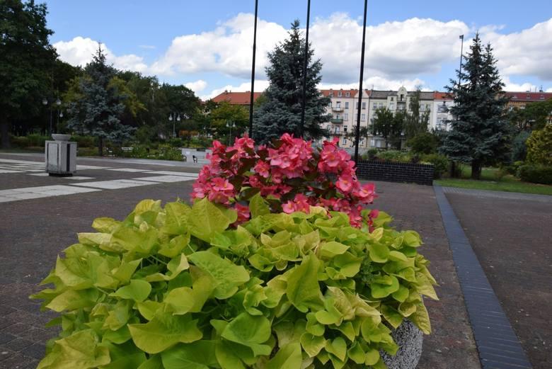 Nową Sól śmiało nazwać można miastem kwiatów. Całe centrum, choć nie tylko, zdobią: klomby, kwietniki, kwiaty wiszące. Zaprezentowane ozdoby miasta pochodzą