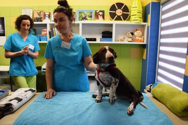 Pies Fijo rehabilitowany jest w klinice w Bielsku-Białej