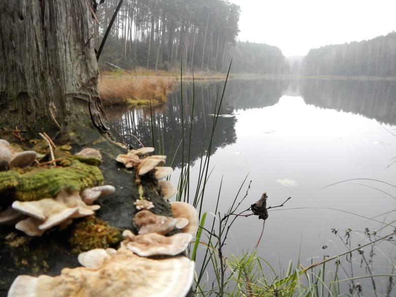 W krainie pływających wysp - koło Lubiewa, Klonowa i Zamrzenicy