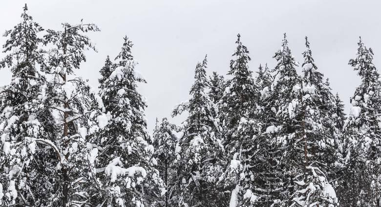 Piękne Bieszczady w zimowej szacie.