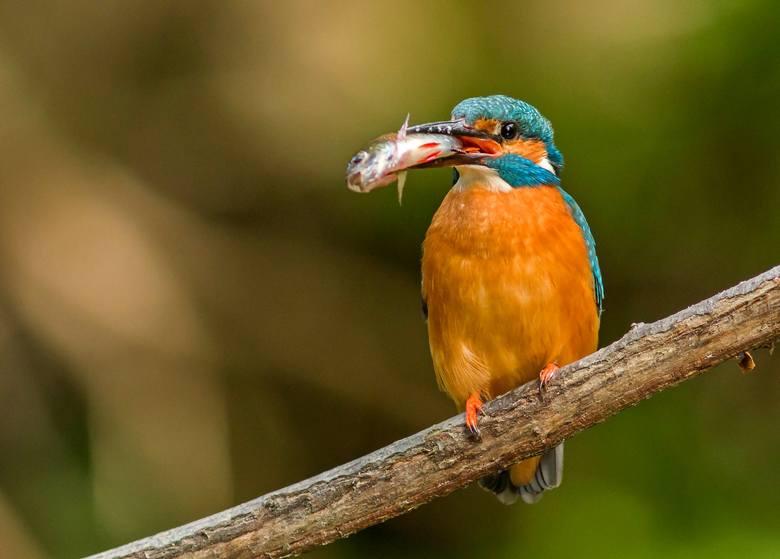 Rafał Kulisz robi fenomenalne zdjęcia ptaków. Jaką ma receptę na udane fotki? [ZDJĘCIA]