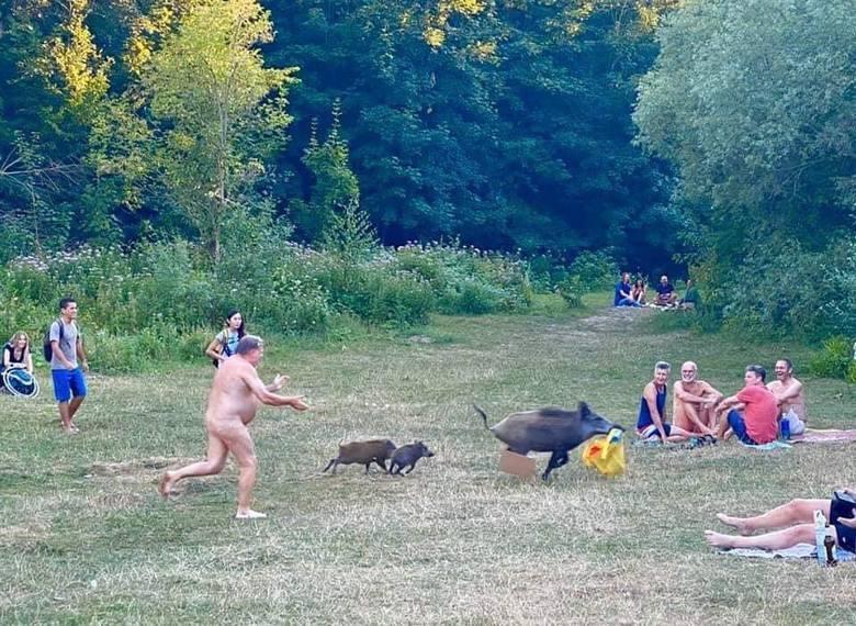 Zdjęcia mężczyzny w stroju Adama goniącego dziki stały się hitem sieci. Uspokajamy jednak. Wbrew niektórym informacjom, do zdarzenia nie doszło wcale