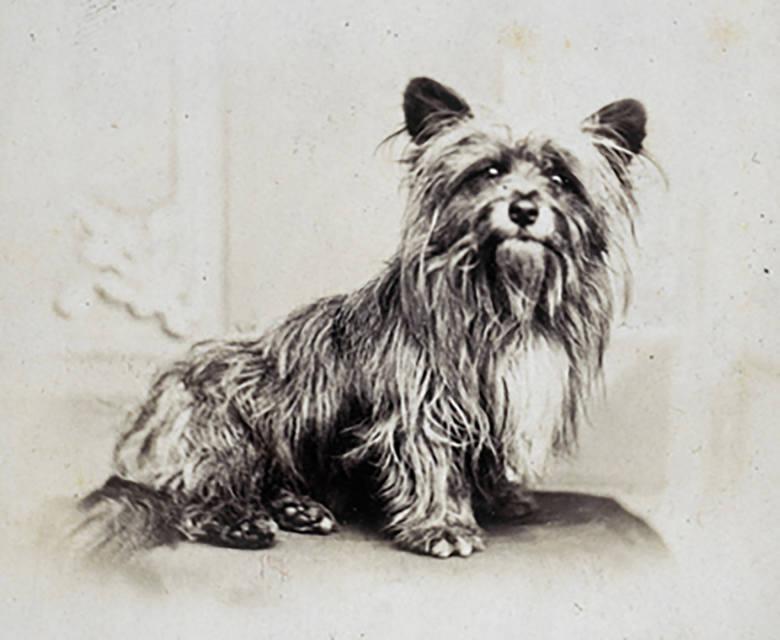 psy wierne po śmierci psi bohaterowie słynne psy