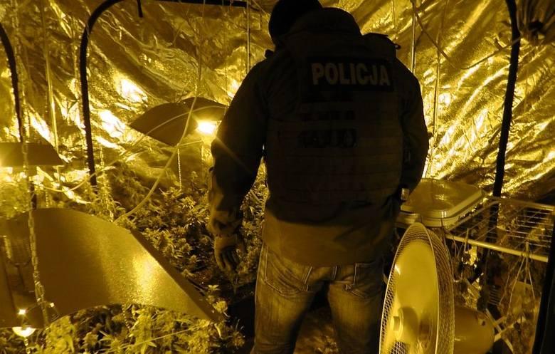 Funkcjonariusze opolskiego zarządu CBŚP zajmujący się zwalczaniem przestępczości narkotykowej weszli do jednego z domów w powiecie nyskim Tam, podczas
