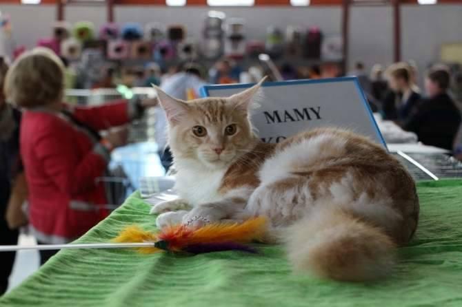 Na miejscu są również wolontariusze Fundacji Kotkowo, którzy chętnie udzielają wszelkich rad dotyczących opieki nad kotami, jak również pomagają w podjęciu decyzji o adopcji kota.