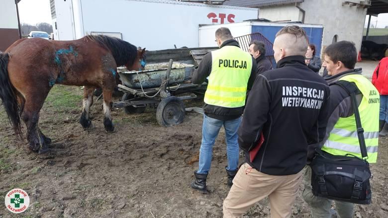 Konie i krowy w odchodach. Jest prokuratorskie śledztwo