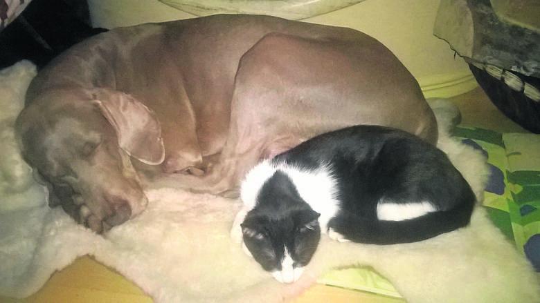 Kot lubił spędzać czas z drugim pupilem. Teraz pies nie rozumie, dlaczego zwierzaka już nie ma...