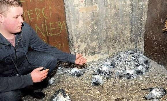 Prokuratura prowadzi śledztwo, kto spowodował śmierć kilkudziesięciu ptaków w kamienicy przy al. Wojska Polskiego.