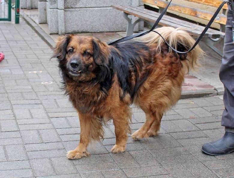 Pan do szpitala, a pies do schroniska przy ul. Marmurowej