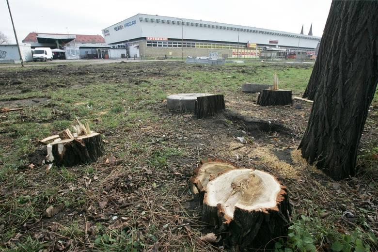 W okolicach dworca PKS wycięto ponad 100 drzew