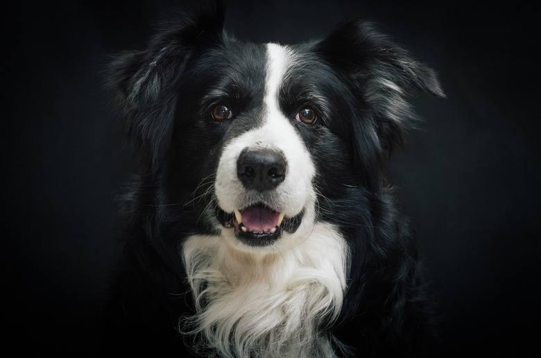 1 lipca przypada Światowy Dzień Psa. Pies to nie tylko najlepszy przyjaciel. Wiele badań wskazuje, że jego towarzystwo może mieć zbawienny wpływ na nasze