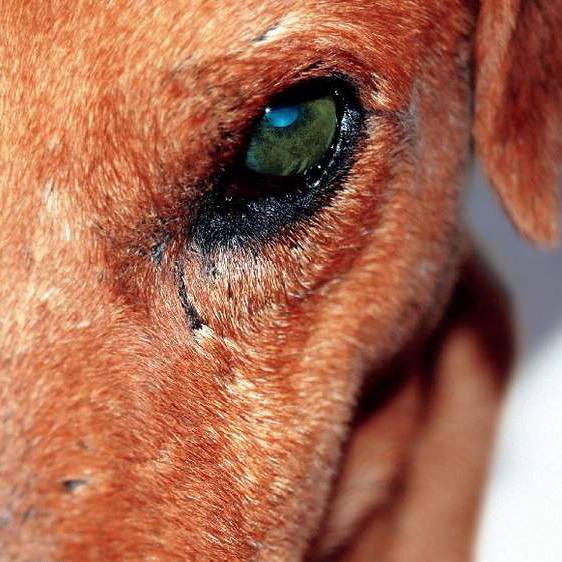 Mężczyzna zmasakrował łopatą bezbronnego psa