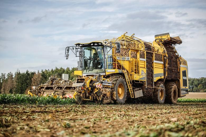 Uprawa buraków cukrowych w Polsce w obliczu suszy - plonowanie, polaryzacja i inne dane