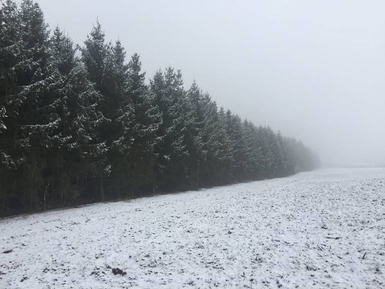 Tak wygląda las zimą