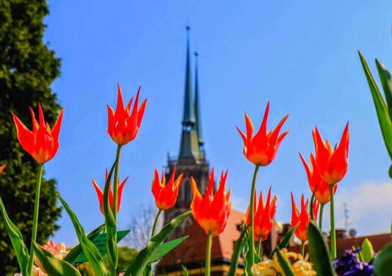 Wiosna - choć później niż w minionych latach, w końcu wygrała z zimą. Zrobiło się cieplej i piękniej. Zobaczcie, które miejsca we Wrocławiu zachwycają