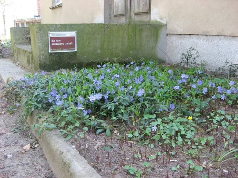 Przepiękna wiosna zawitała do Muzeum Walewskich w Tubądzinie. Zobaczcie! ZDJĘCIA