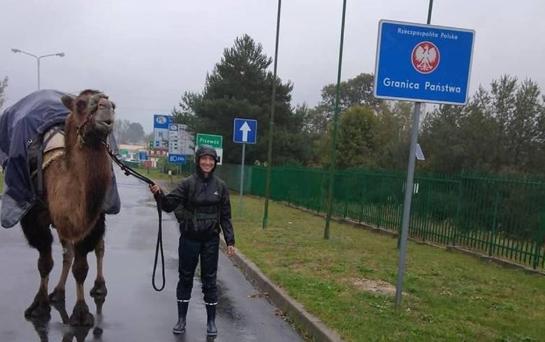 Najbardziej znany wielbłąd w Polsce nie żyje. Attikę poznaliśmy w ubiegłym roku, kiedy razem ze swoją właścicielką przeszła przez Lubuskie