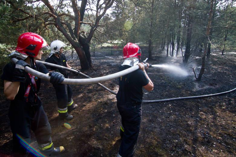 Na toruńskim poligonie przy ulicy 63 Pułku Piechoty wybuchł wielki pożar lasu i trawy.Zadysponowano 15 zastępów straży pożarnej. Jak się dowiedzieliśmy,