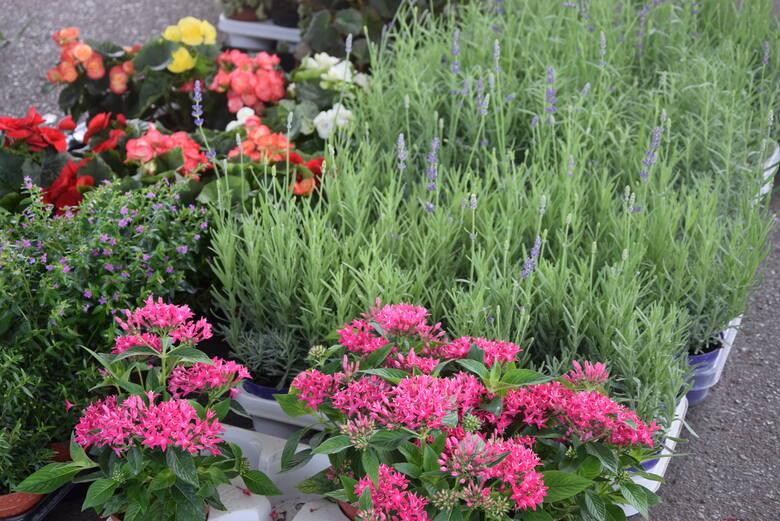 Popularne PTHW, czyli Podkarpackie Centrum Hurtowe Agrohurt Rzeszowie, oferuje kwiaty, zioła i krzewy, które można posadzić w ogródkach, balkonowych