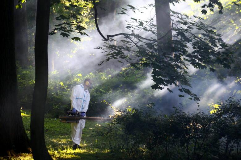 Lublin rozpoczął walkę z komarami i meszkami. Na początek Ogród Saski (ZDJĘCIA)