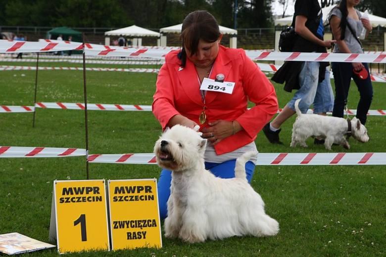 Wystwa psów rasowych w Szczecinie. Zobacz najpiękniejsze rasy z całej Europy