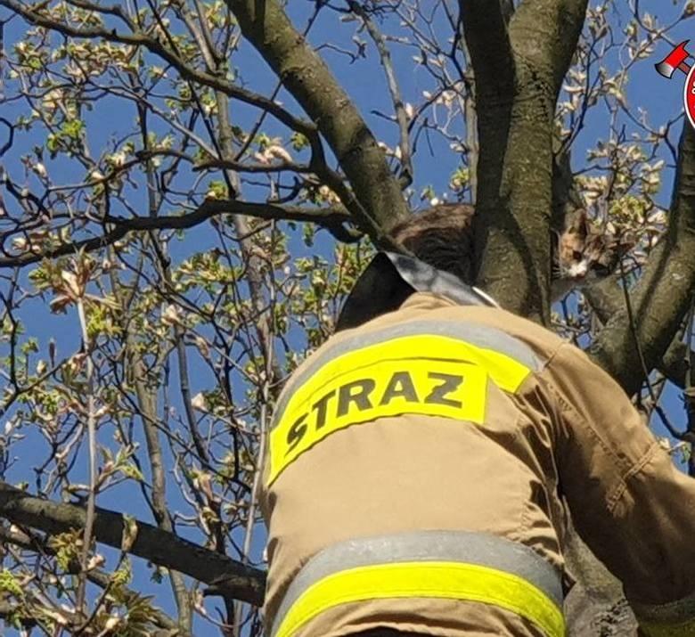 Uwięzionego kota na drzewie zdjęli kilka dni temu strażacy. Zaczyna się dla nich też sezon  gaszenia pożarów traw i usuwania gniazd owadów błonko-skrzydłowych.