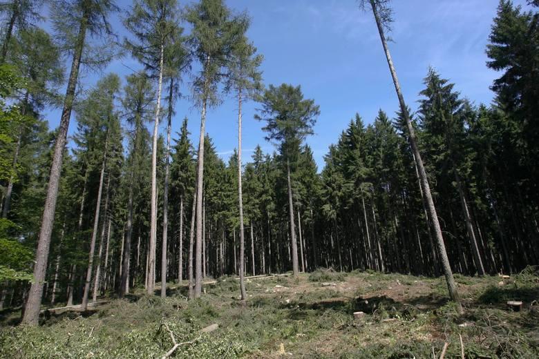Gdzie jest najwięcej lasów? Sprawdziliśmy dane ze wszystkich powiatów. Na którym miejscu jest twój?14. Powiat kolneński: 20 947,09 ha