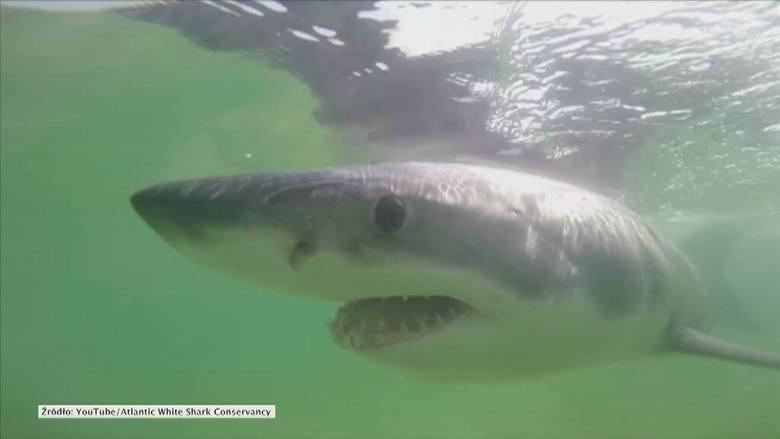Rekin ludojad w Chorwacji? Sprawdzamy czy to prawda