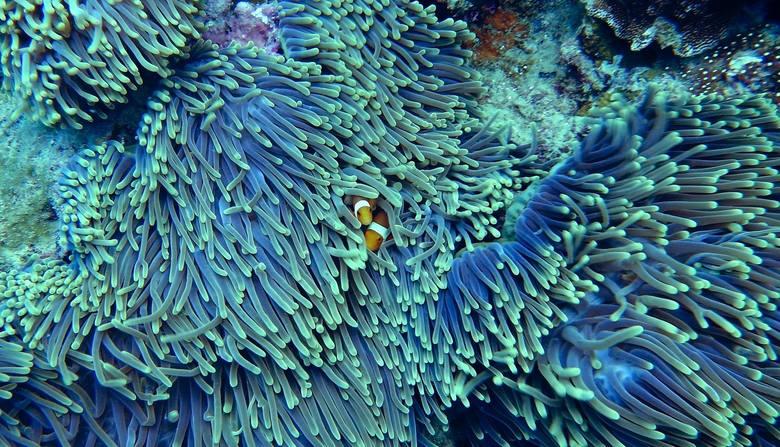 Wielka Rafa KoralowaWielka Rafa Koralowa zagrożona jest całkowitym wymarciem. Naukowcy twierdzą, że jej uszkodzenia są nieodwracalne. Wszystko przez