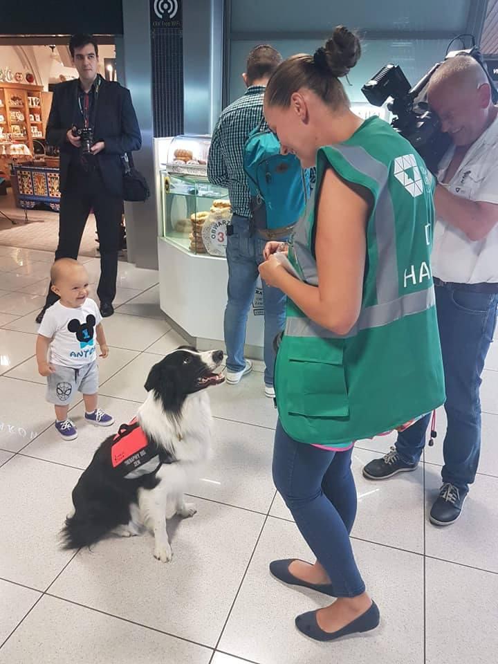Przed wakacyjnym lotem stres pomoże rozładować pies Zen