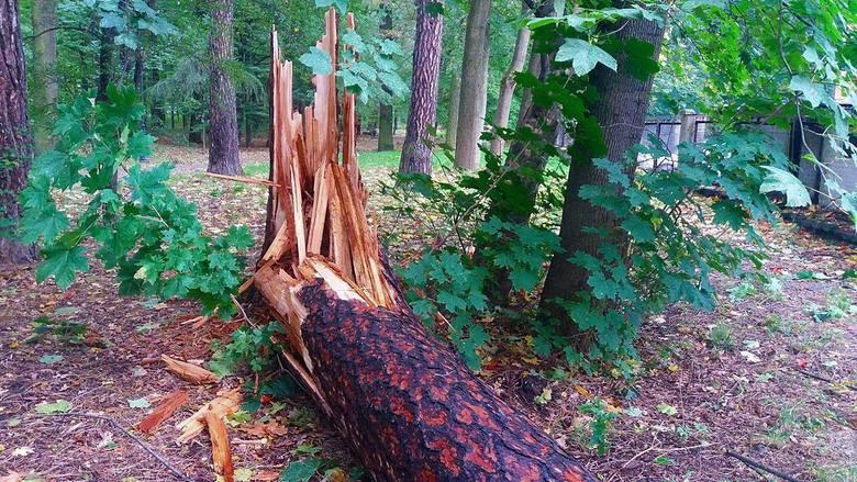 Park Habsburgów w Żywcu został zniszczony przez wiatr. Trzeba go było zamknąć
