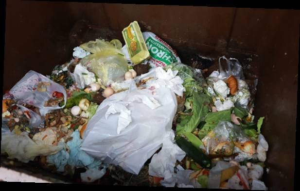 """Oto co znalazło się w pojemniku na odpady """"bio"""", znajdującego się na posesji jednego z gogolińskich mieszkań wielorodzinnych."""