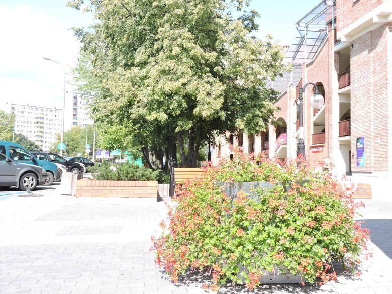 Prezydent Łukasz Kulik zapowiada, że uporządkuje sprawę opieki nad zielenią miejską