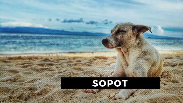 Zastanawiacie się, gdzie spokojnie możecie zabrać ze sobą swojego psa? Większość plaż jest zamknięta dla czworonogów. Zazwyczaj pozwolenie na przebywanie