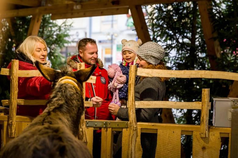 Osiołek i owieczki to jedna z najmilszych bożonarodzeniowych atrakcji, które zawsze przyciągają najmłodszych białostoczan na Rynek. Tak było też i w