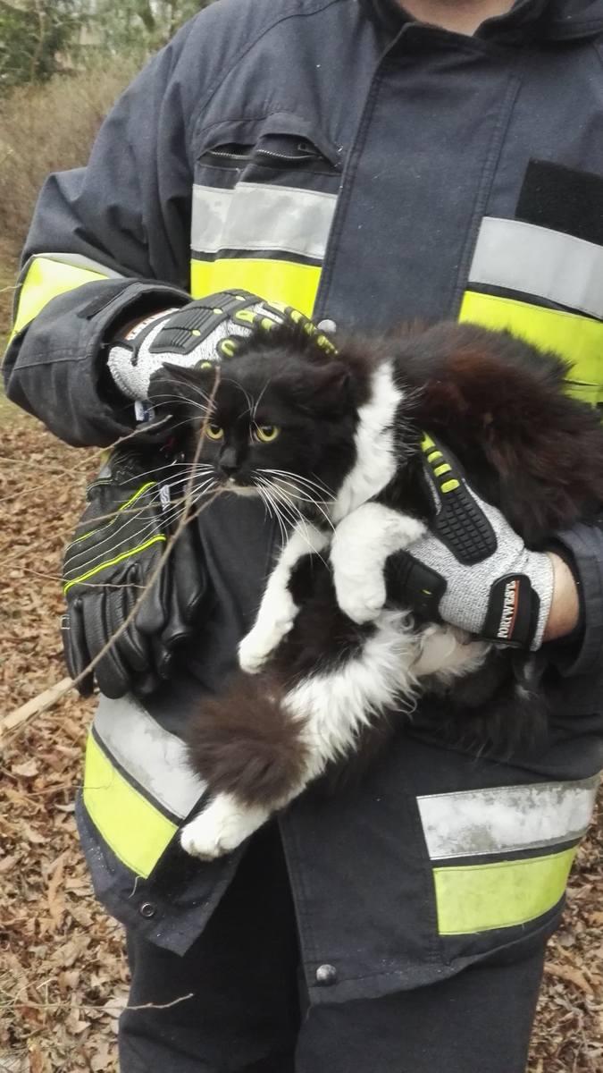 W piątek druhowie OSP Tarnowiec udali się niecodziennego zdarzenia. Jeden z mieszkańców Tarnowca zgłosił, że od kilku dniu na dużymi drzewie znajduję