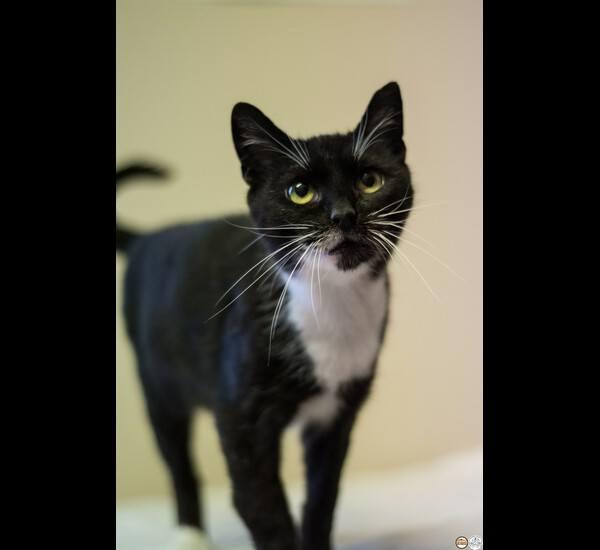Bianca to około 5-letnia koteczka. Bardzo lubi być blisko człowieka. Z przyjemnością daje się głaskać. Umie korzystać z kuwety.