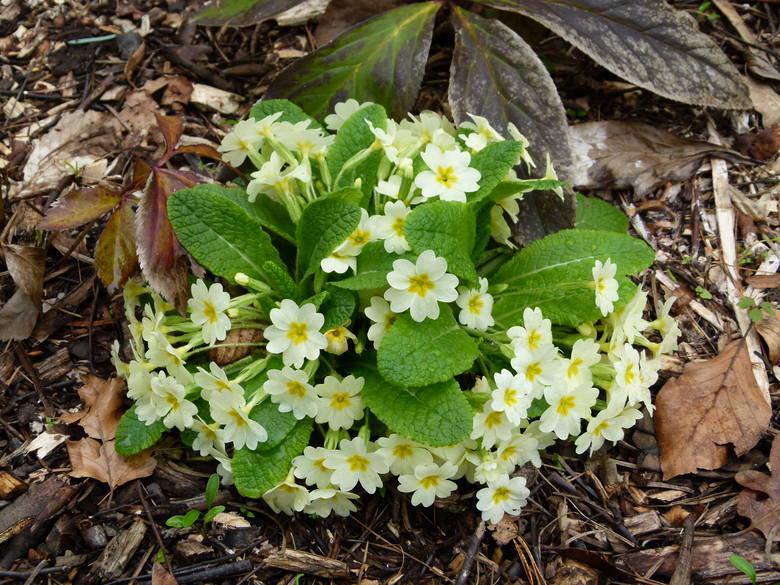 Kto tęskni za wiosną? Oto kilka wiosennych migawek z arboretum w Rogowie [ZDJĘCIA]